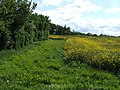 Hedge and field next to Hillfoot Farm - geograph.org.uk - 427965.jpg