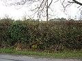 Hedgerow beside Long Hill - geograph.org.uk - 1563798.jpg