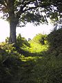 Hedges Walk - panoramio.jpg
