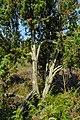 Heide-Wacholder.jpg