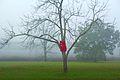 Heike Endemann - Crawling, Red. 2013.jpg