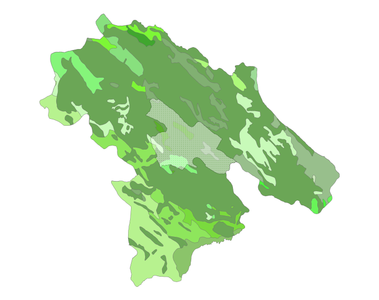 Herbaceous plants of choram county.png