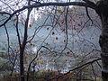 Herbststimmung am Alter See.jpg