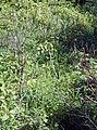 Hernals 1170 Feuchtbiotop.jpg