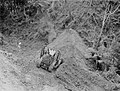 High angle view of a man descending a hill in a bulldozer (AM 77388-1).jpg