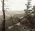 Hillside, wood, view Fortepan 92424.jpg