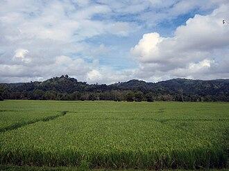 Hinoba-an - Rice field in Hinoba-an