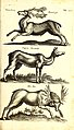 Historiae naturalis de quadrupetibus libri - cum aeneis figuris; (Historiae naturalis de serpentibus libri II; Historiae naturalis de insectis libri III; Historiae naturalis de exanguibus aquaticis (14750841242).jpg