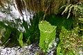 Hoh creek greens water cbubar (17116538369).jpg