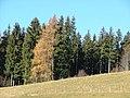 Hohegg - panoramio.jpg