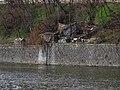 Holešovice, bezdomovecká usedlost pod plánovací komisí (03).jpg