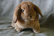 Pet Wikipedia
