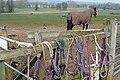 Home Farm tack - geograph.org.uk - 1189312.jpg