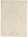 Homo sapiens - proportie van de man - 1700-1880 - Print - Iconographia Zoologica - Special Collections University of Amsterdam - UBA01 IZ19400017.tif