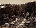 Hong Kong; the Parsee Cemetery, Happy Valley. Photograph. Wellcome V0037355.jpg