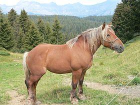 cheval de trait d'une race appreciee pour sa viande