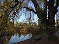 Humber Arboretum (22659359038).jpg