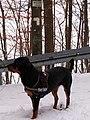Hundshalde - panoramio.jpg