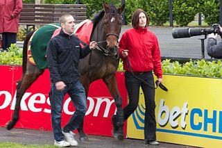 Hurricane Fly Irish-bred Thoroughbred racehorse