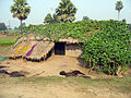 Hut out of Bodhgaya.jpg