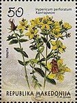 Hypericum perforatum. Stamp of Macedonia.jpg