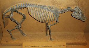 Protorohippus - Skeleton cast
