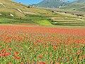 I Piani di Castelluccio durante la fioritura della lenticchia (3).jpg