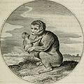 Iacobi Catzii Silenus Alcibiades, sive Proteus- (1618) (14747252824).jpg