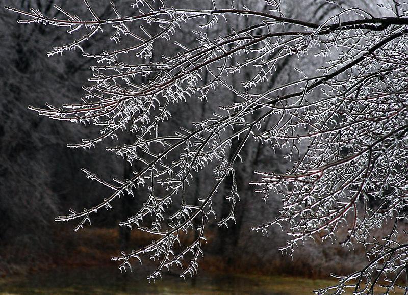 File:Icy Swamp Maple, Boxborough, Massachusetts, 2008.jpg
