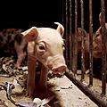 Igualdad Animal - 42 (7139533509).jpg