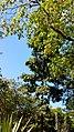 Iguana en el jardín botánico de medelin.jpg