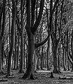 Im Gespensterwald.jpg
