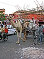India-6516 - Flickr - archer10 (Dennis).jpg