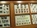 Insects - Kunming Natural History Museum of Zoology - DSC02553.JPG