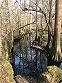 Island Creek Croatan National Forest.jpg