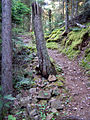 Isle Royale ridge trail.jpg