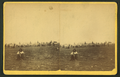 Issuing rations. (Showing an Indian with a pipe in his hand in the foreground.), from Robert N. Dennis collection of stereoscopic views.png