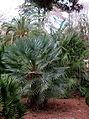 Jardín Botánico de Madrid en febrero- (16466570907).jpg