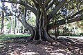 Jardim Agricola Tropical - panoramio (1).jpg