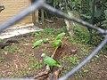 Jaziquima - Cali Zoo 01.JPG