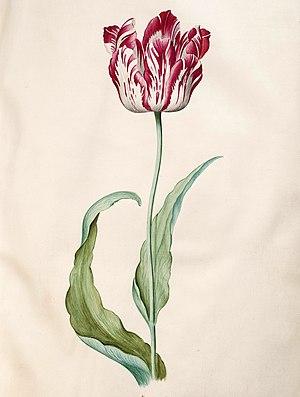 Judith Leyster - Tulip book (1643)