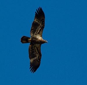 Eagle flod dating