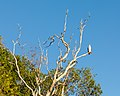 Kakadu (AU), Kakadu National Park, Yellow Water -- 2019 -- 3832.jpg