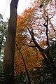 Kamakura - panoramio - AwOiSoAk KaOsIoWa (7).jpg