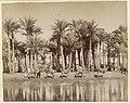 Karavaan met bepakte drommedarissen langs een palmentuin bij een water. Karavaan, Cairo bereikende (titel op object), RP-F-00-5018-3.jpg