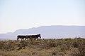Karoo National Park 2014 25.jpg