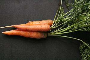 Taproot - The edible, orange part of the carrot is its taproot