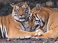Kathmandu zoo Nepal (5086507324).jpg