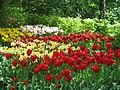 Keukenhof Garden (11).JPG