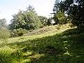 Kinnoull Hill - geograph.org.uk - 1448761.jpg